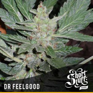 Dr Feelgood autoflowering seeds