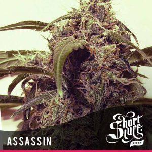 Shortstuff Seedbank Auto Assassin Cannabis Seeds