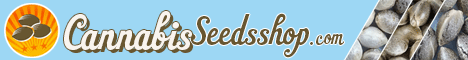 buy shortstuff auto seeds
