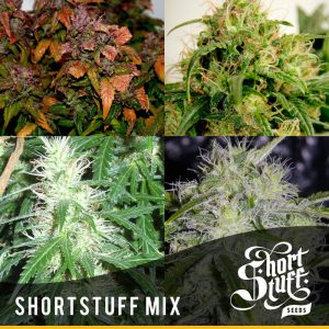 Shortstuff seedbank Mixed Autoflowering seeds