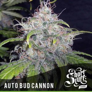 Shortstuff Seedbank Auto Bud Cannon cannabis seeds