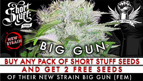 Shortstuff seeds promo free seeds auto big gun