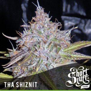 Tha Shiznit auto seeds from Shortstuff