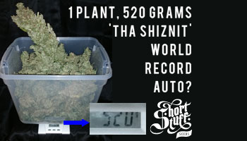 Is Tha Shiznit the world record auto flower strain?