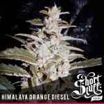 Himalaya Orange diesel