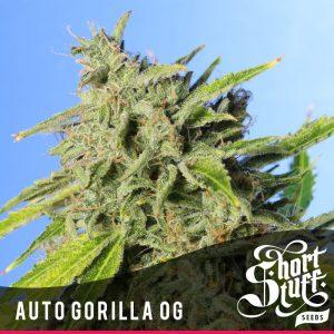 shortstuff auto gorilla OG