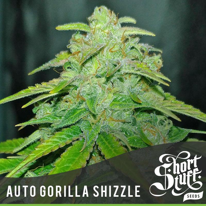 Auto Gorilla Shizzle - Shortstuff Seeds
